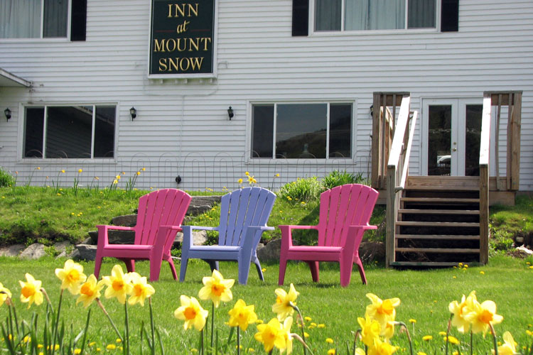 Inn-at-Mount-Snow-Daffodils