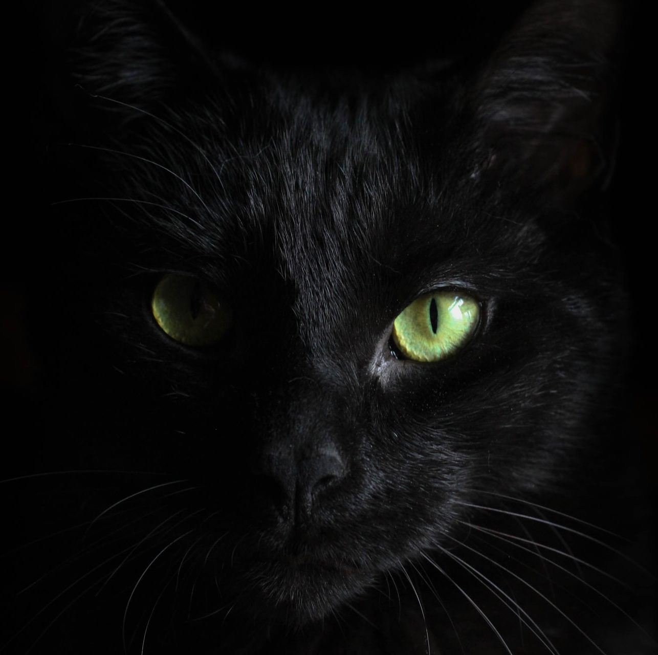 macro photo of black cat Hannah Troupe women cats domestic violence