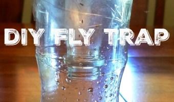 Eco-Friendly DIY Fly Trap