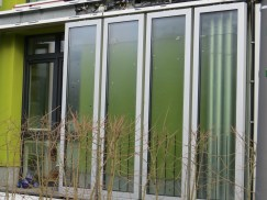 Algae House (look at the bubbles!)