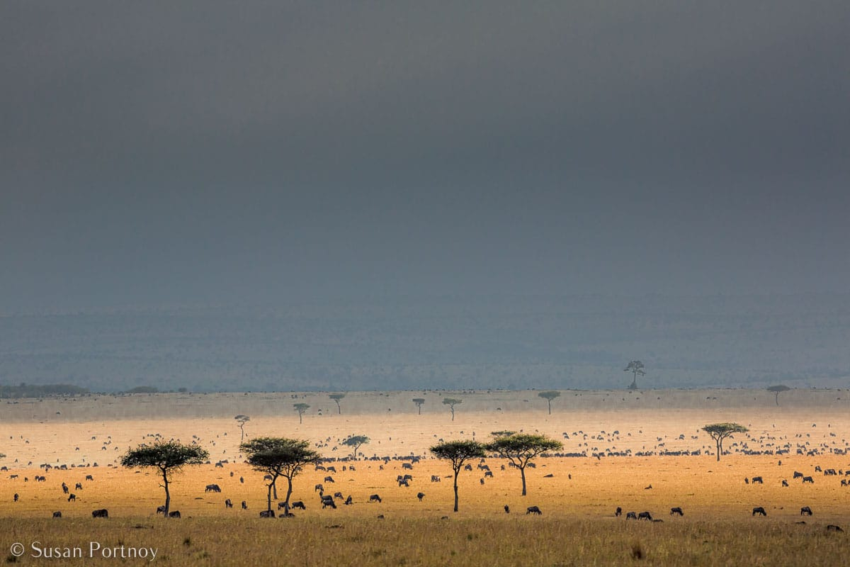 Stunning Silhouette Photos Guaranteed to Inspire Your Travels- trees after a rain on the Masai Mara