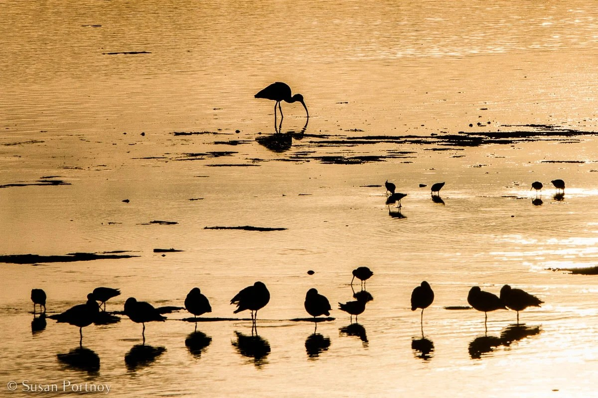 Stunning Silhouette Photos Guaranteed to Inspire Your Travels-Egrets in the water at Ding Darling Wildlife Reserve on Sanibel Island in Florida.