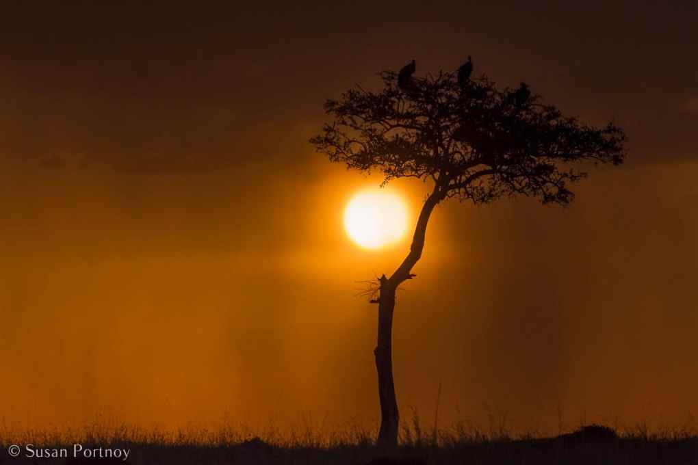 Stunning Silhouette Photos Guaranteed to Inspire Your Travels-Vultures on an acacia tree in the Masai Mara.