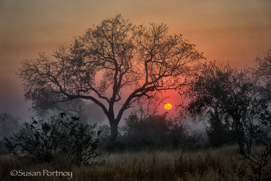 Sunrise in Timbavati, South Africa