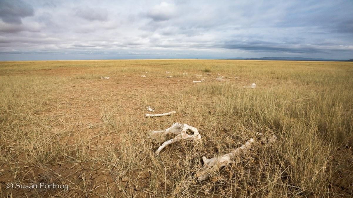Skeletons on Lake Amboseli in Kenya