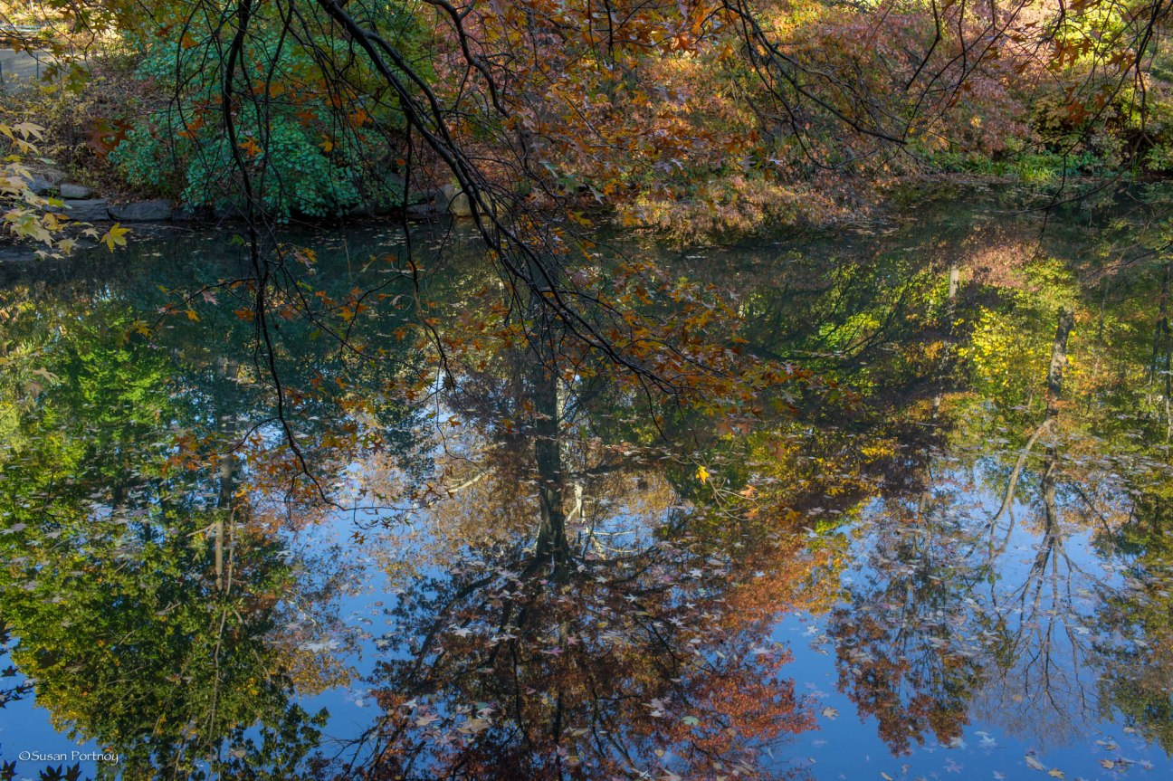 Fall leaves reflection in Banks Rock Bay in Central Park, NYC