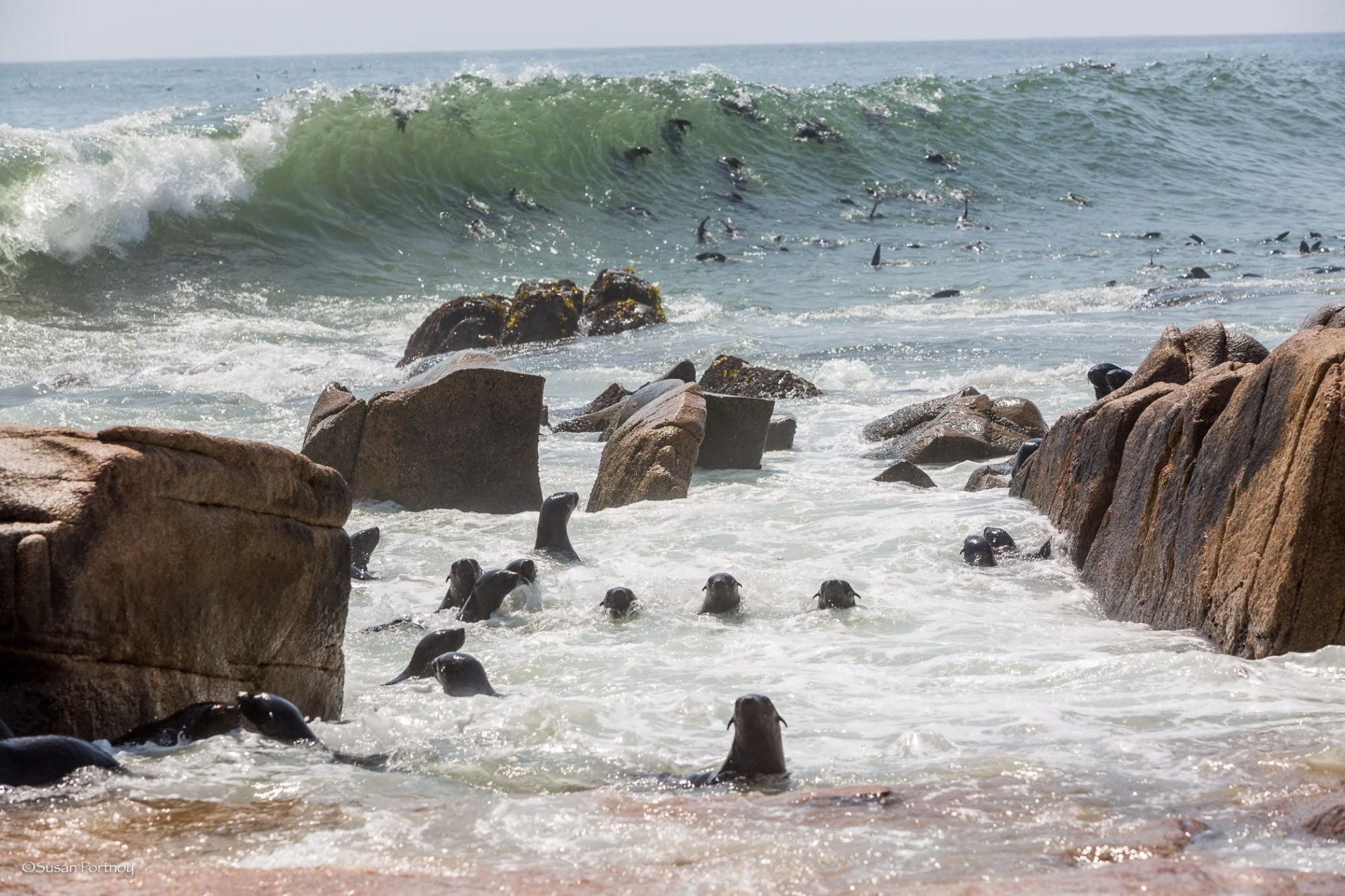 Seals frolic in the water on Namibia's Skeleton Coast