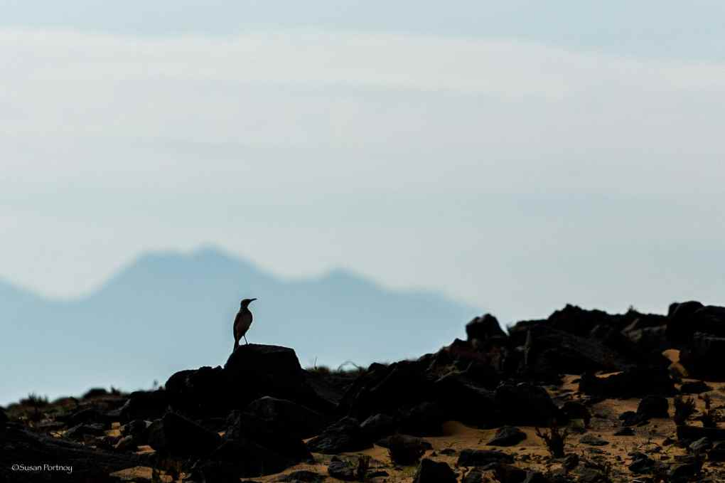 Tiny bird in Silhouette at Serra Cafema in Namibia