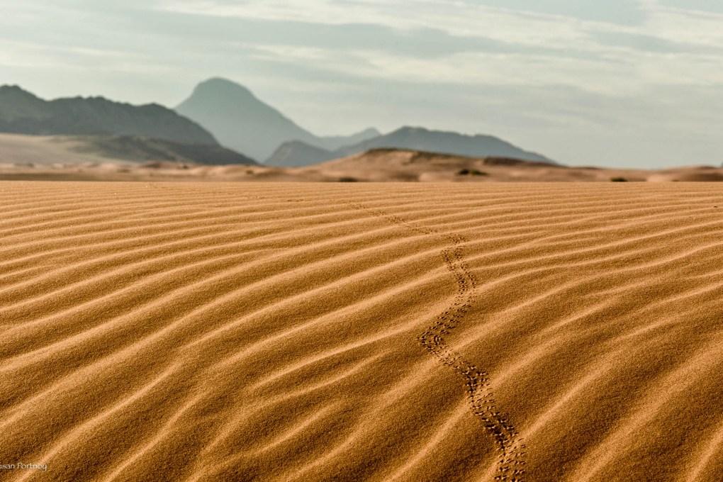 Beetle tracks in the sand dunes near Serra Cafema Camp, Namibia