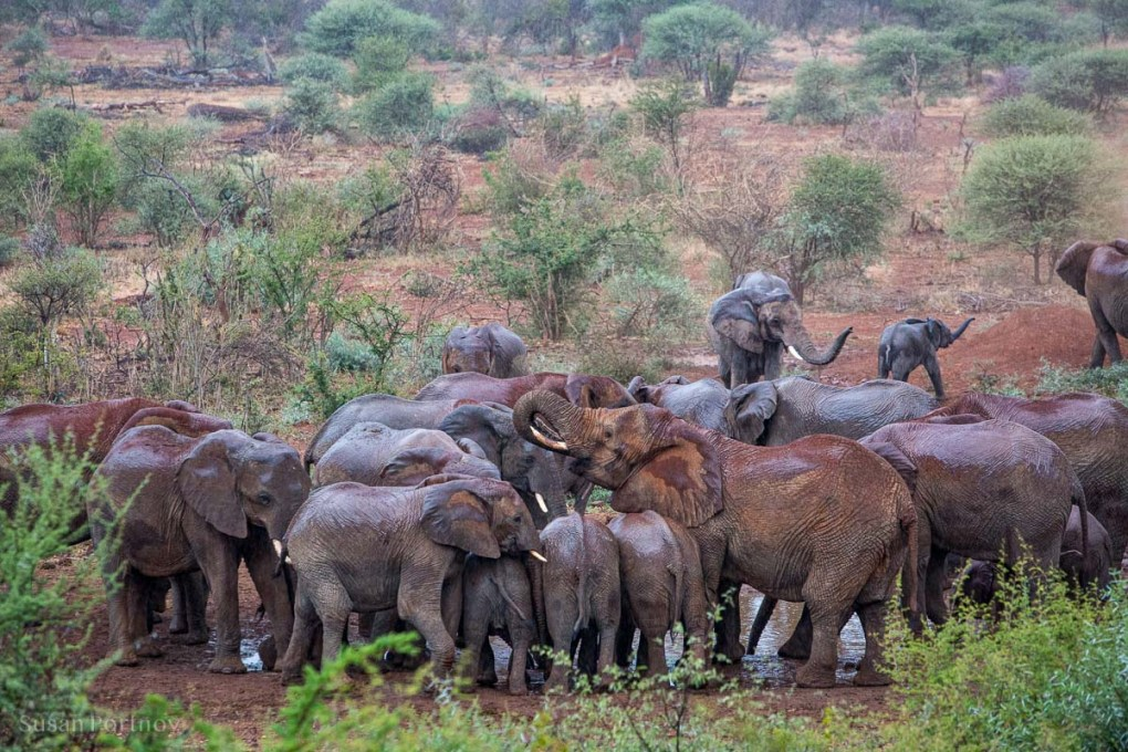 Elephants in the rain at a watering hole