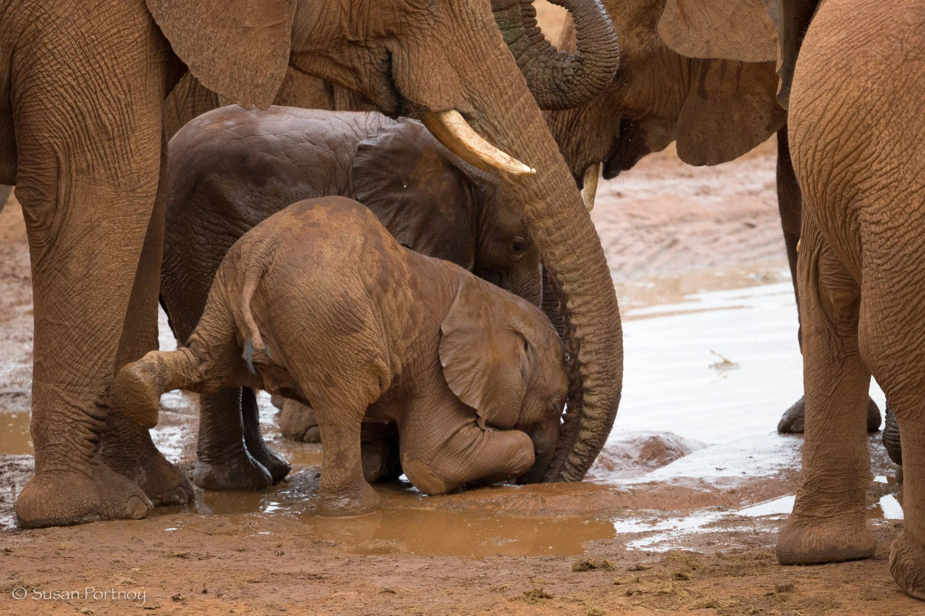 baby elephant trying to drink from the watering hole around the Molori Safari Lodge in South Africa
