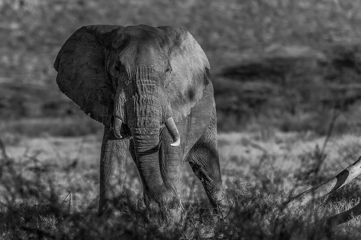 How You Can Help Save the Elephants on #WorldElephant Day