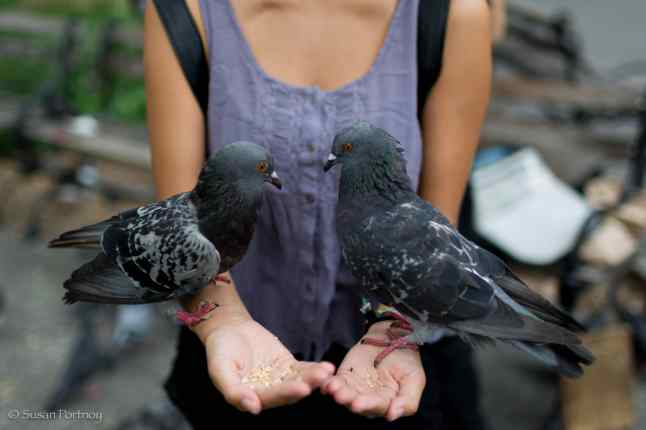 A passerby asks Larry if she can feed the pigeons. Two seconds later, seed in hand, she has her wish