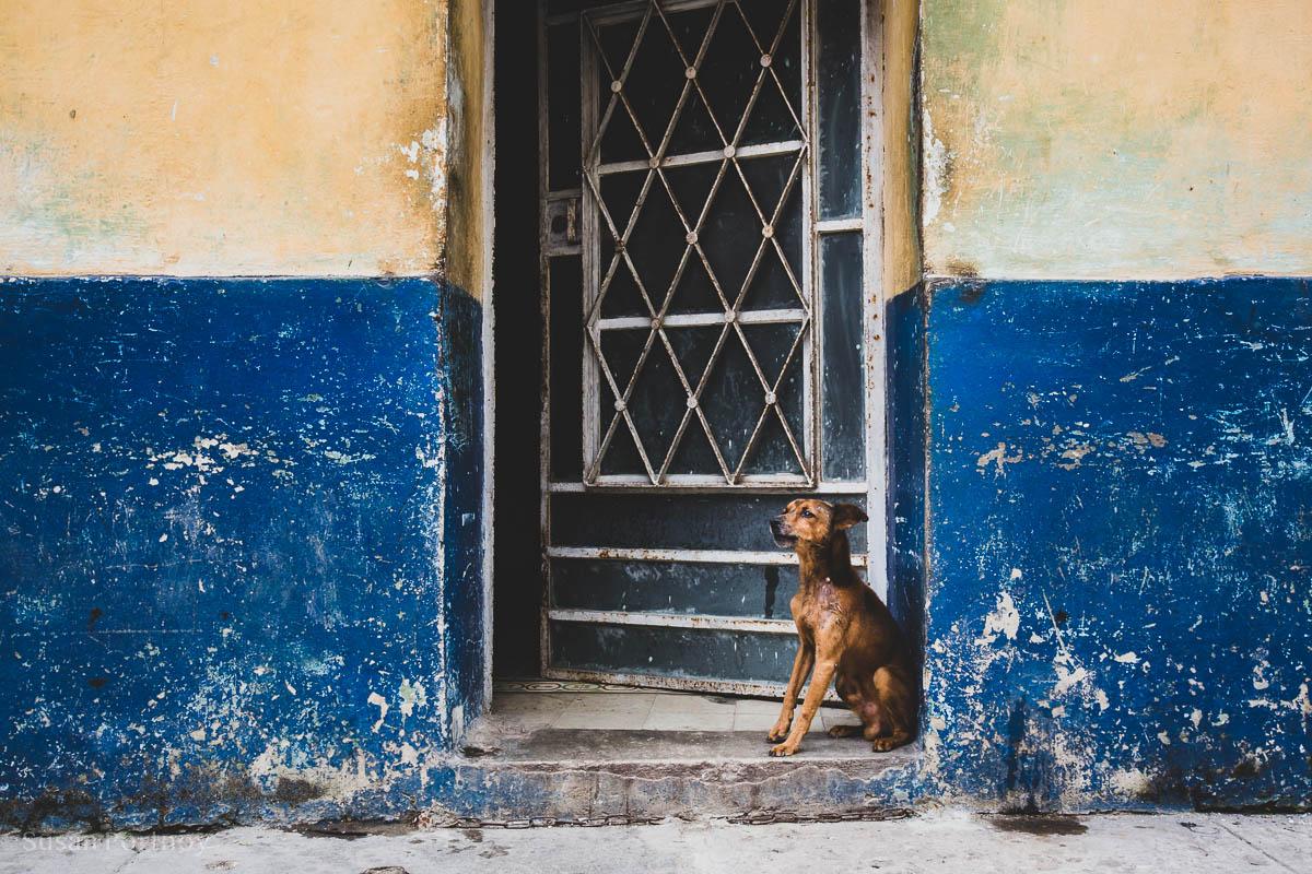 Dog in the doorway of a home in Havana