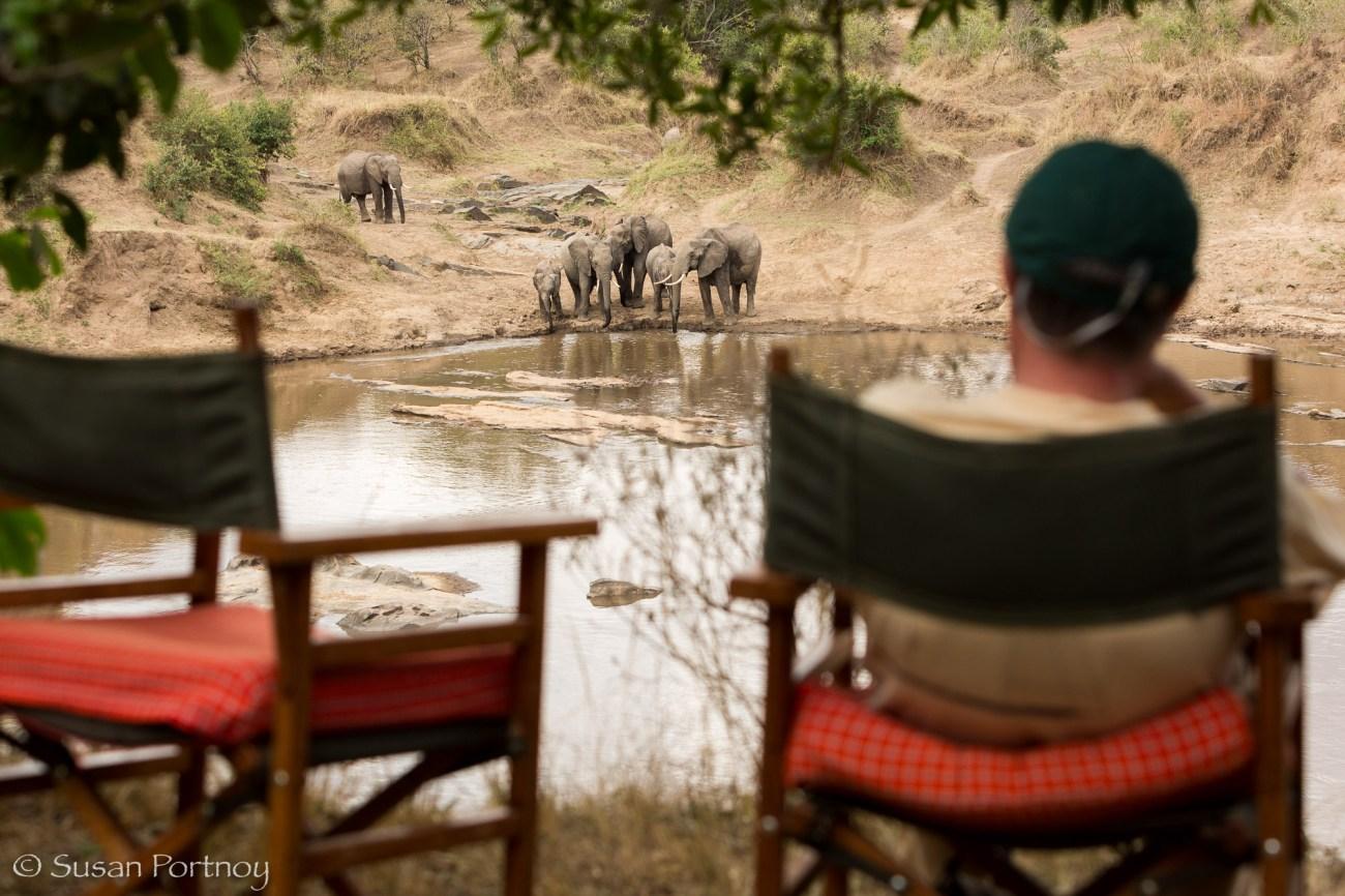 Elephants drinking water in the Mara River_SPortnoy