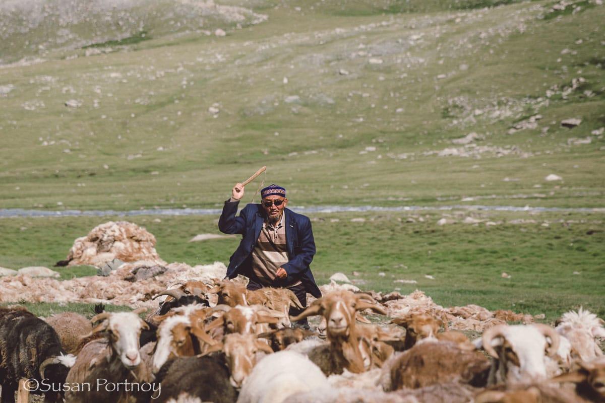 An elder kazakah man chases goats and sheep in Mongolia