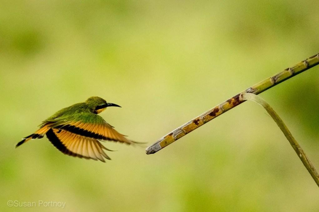 sportnoy_birds-07