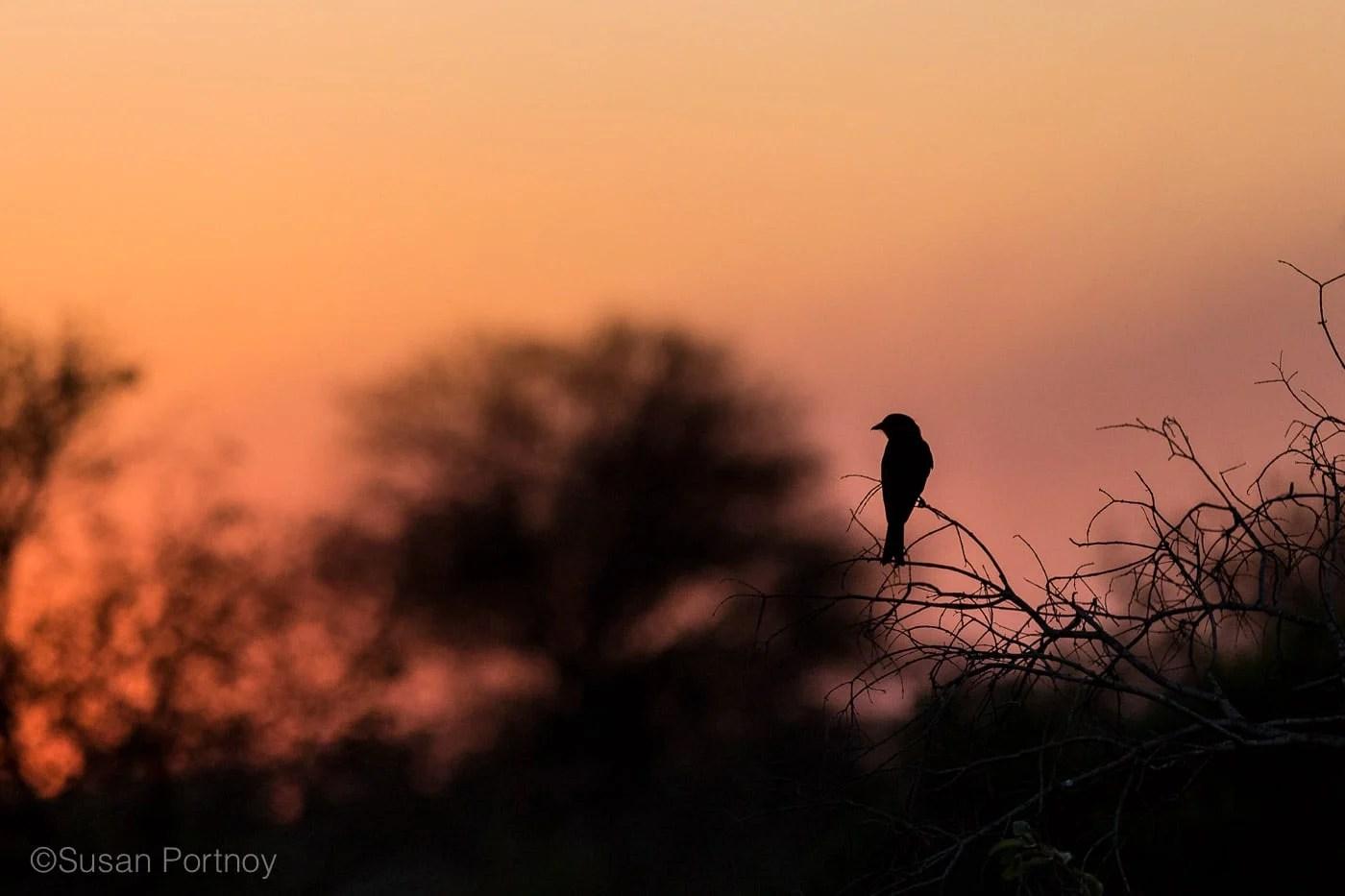 sportnoy_birds-09