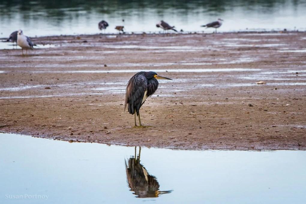Bird - Best Guide to the Ding Darling Wildlife Refuge on Sanibel Island-119201