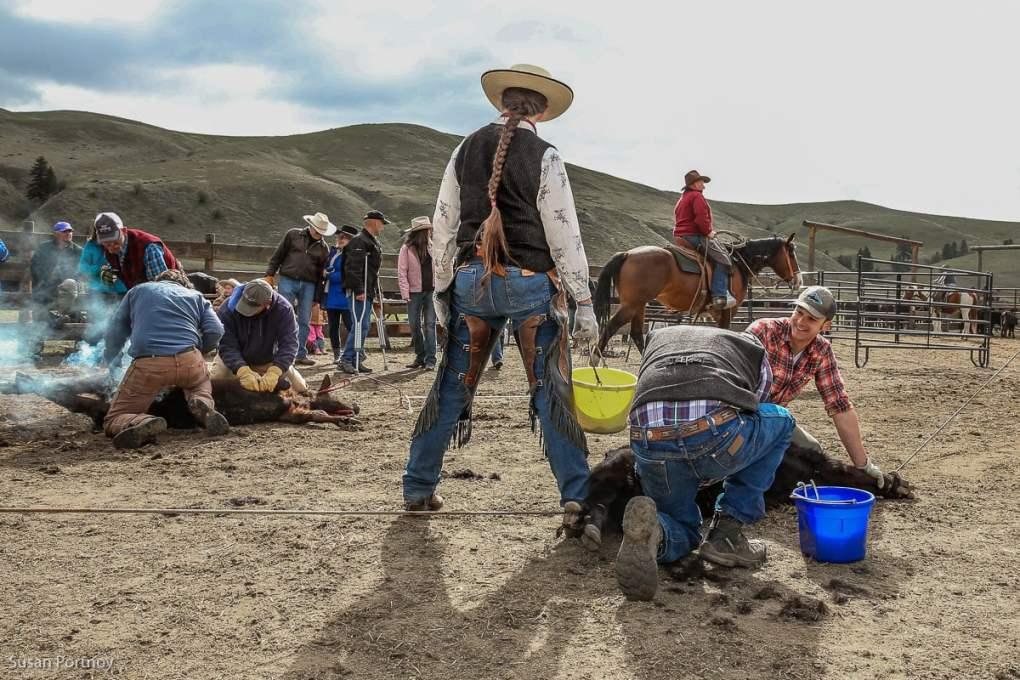 Triple Creek Ranch Cattle Branding Day in Montana - The Insatiable Traveler