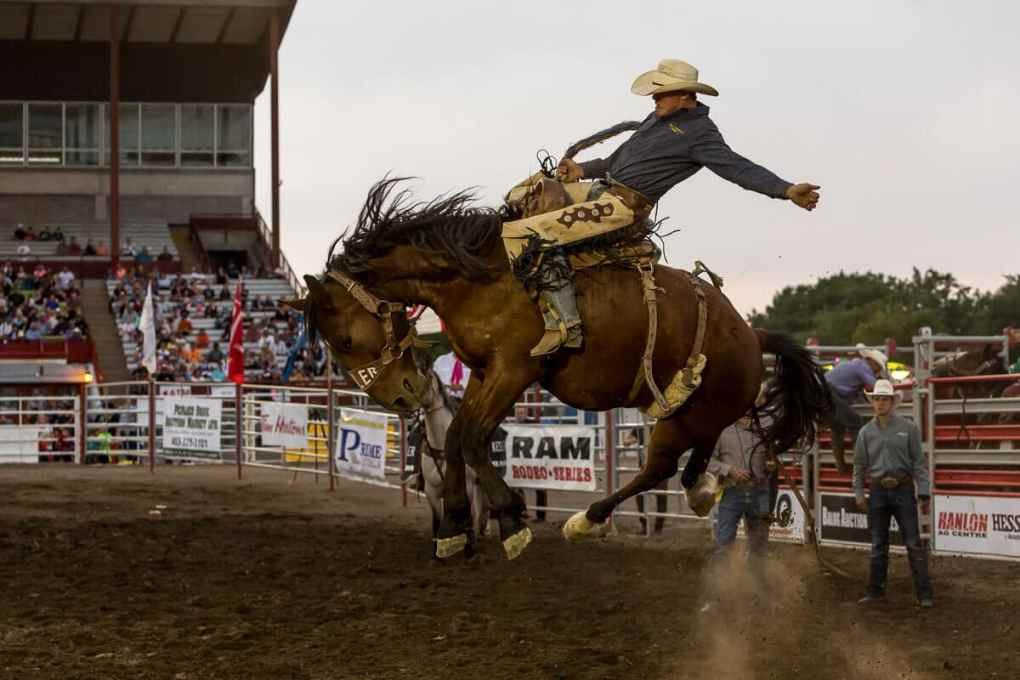 Whoop Up Days rodeo - man on bucking horse