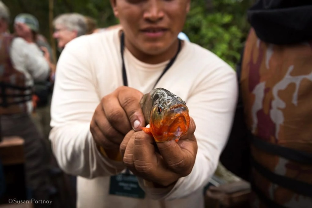 Piranha fishing | Amazon River Cruise Peru -International Expeditions-01-4