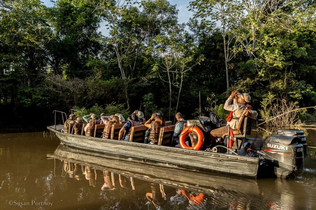 Guests and crew check out a bird in the canopy | Amazon River Cruise Peru -International Expeditions-05