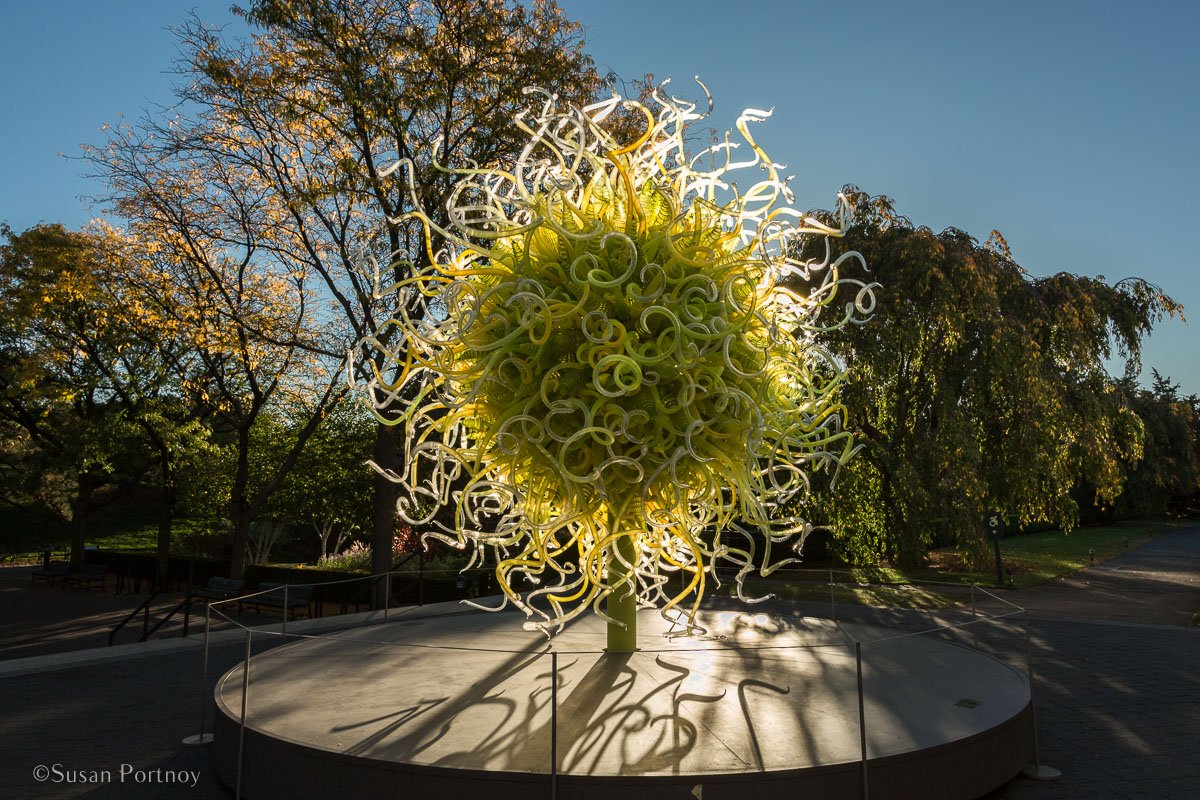 A sculpture from the Dale Chihuly exhibit in 2017-Spend a Perfect Day at the New York Botanical Garden-775820171028