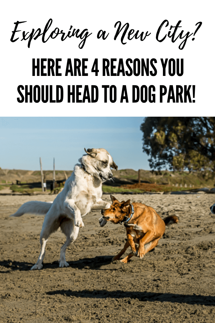 Exploring a new city is one of the best things about travel but what's the best way to go about it_ Here's something new, try a dog park! #travel #dogs #dogpark