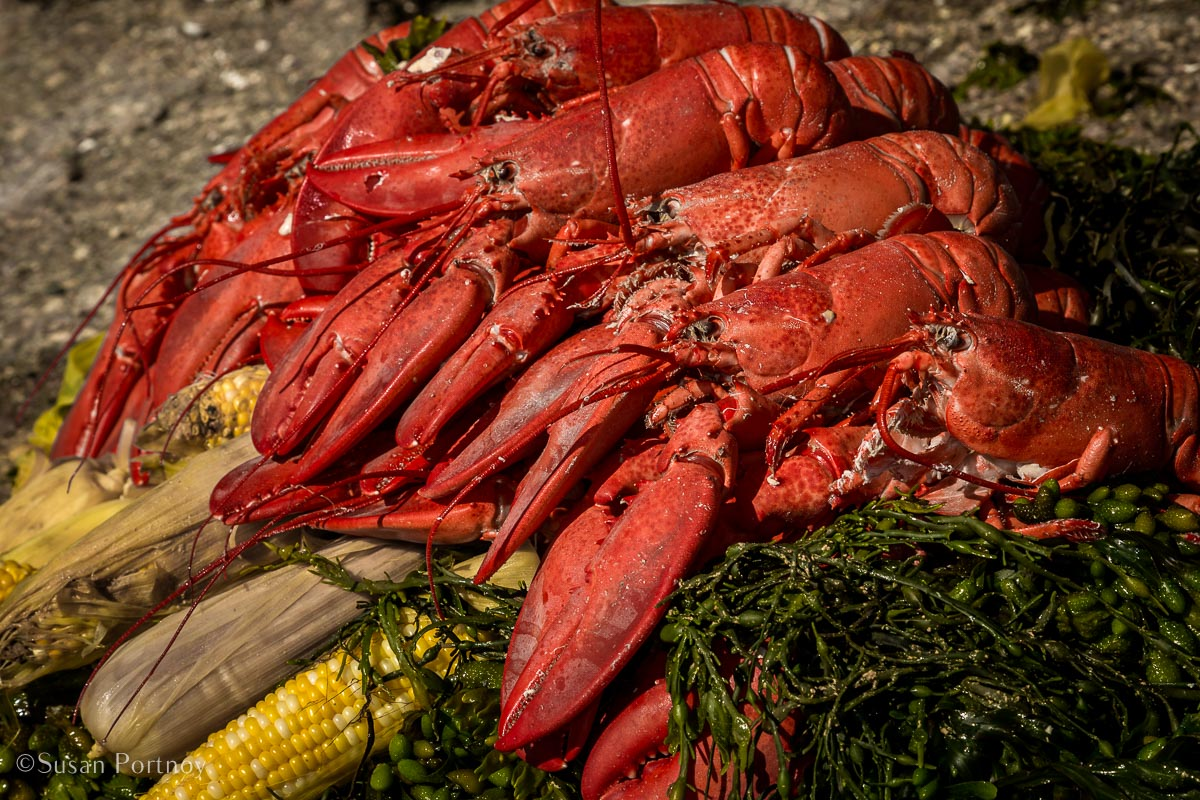 Lobster and corn on the cob on a bed of seaweed - Windjammer cruise in Maine-625220180704