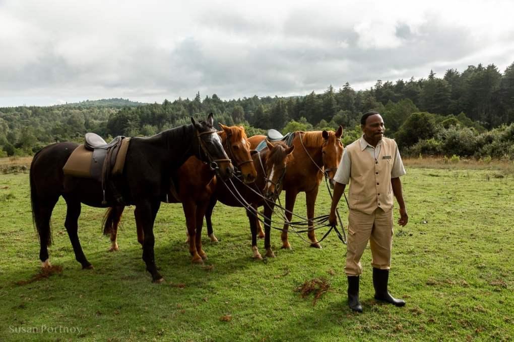 Horses at the Mount Kenya Safari Club - How to Experience More Beyond Kenya's Big Five -7507