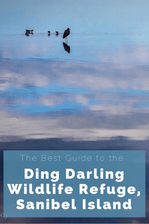 The Best Guide to the Ding Darling Wildlife Refuge on Sanibel Island, Florida. #DingdarlingWildlifeRefuge #dingdarlingsanibelisland #sanibelisland #sanibelislandflorida