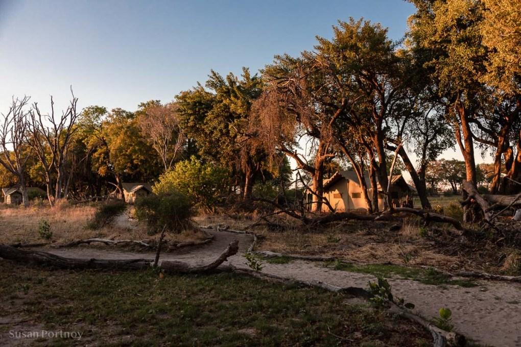 One of the five guest tents -Duba Explorers Camp Okavango Delta, Botswana-201