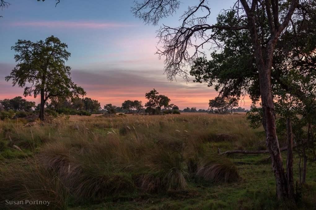 The view from my tent at sunrise -Duba Explorers Camp Okavango Delta, Botswana-2901