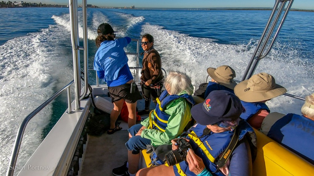 Swimming with whale sharks - back of boat GH01037120190118