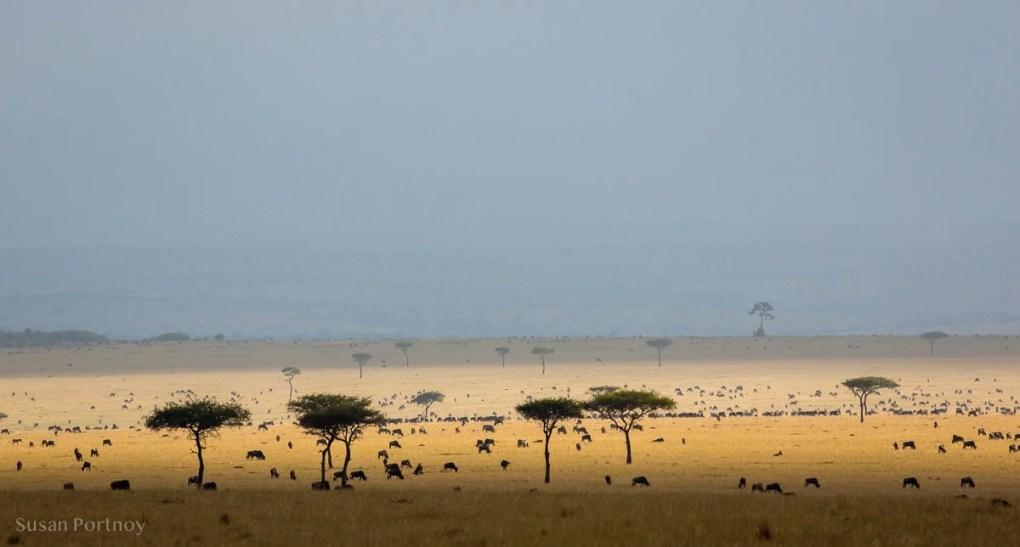 Masai Mara after a rain