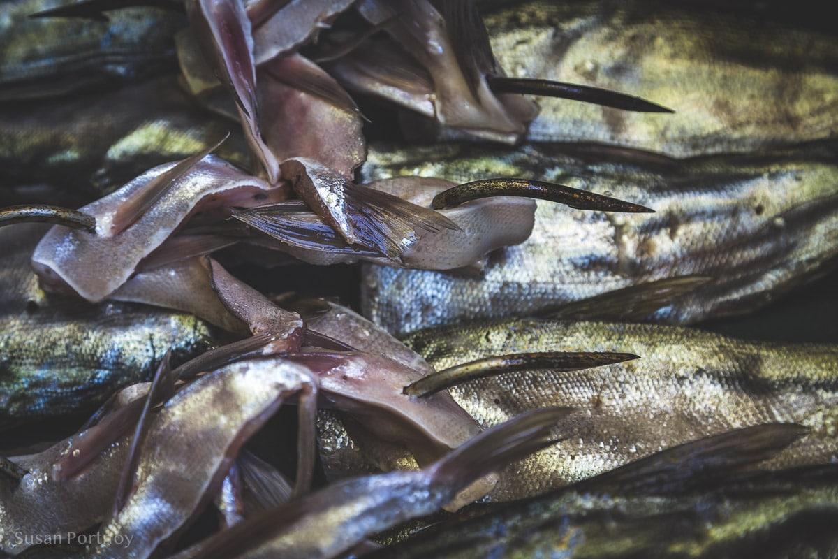 Fish on a bait hook in Cojimar, Cuba