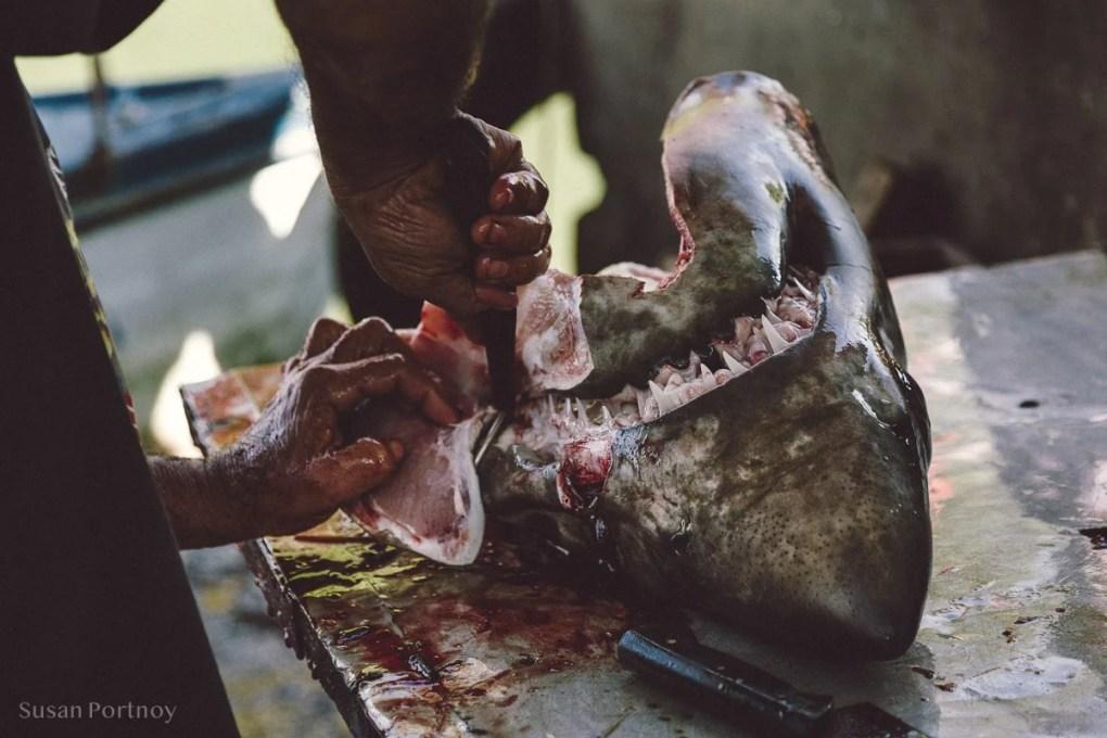 Shark head in Cojimar, Cuba