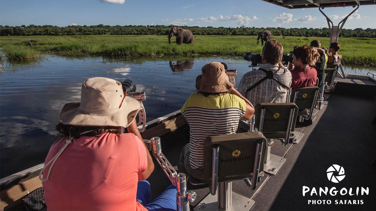 Pangolin Photo Safaris - African Photo Safaris