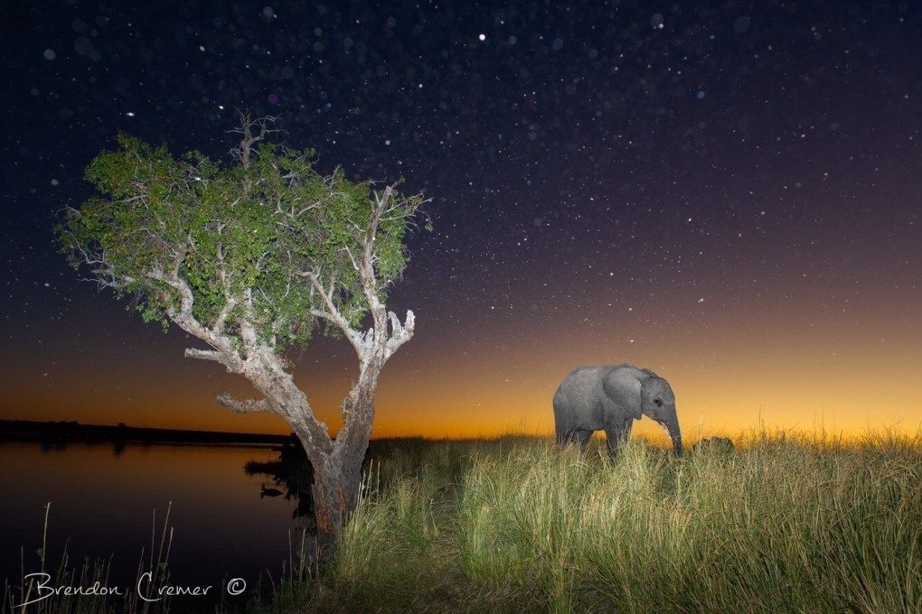 Elephant under a tree at night - Photo: Brendon Cremer