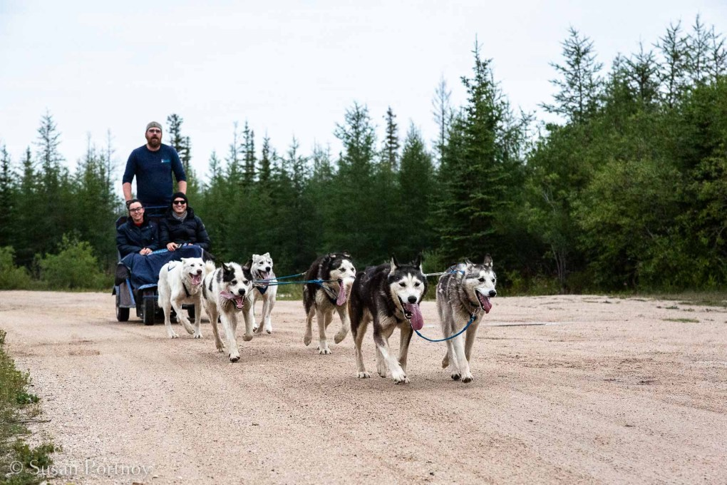 Dog carting in July with BlueSky Expeditions