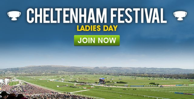bet on the top horses competing at Cheltenham Festival