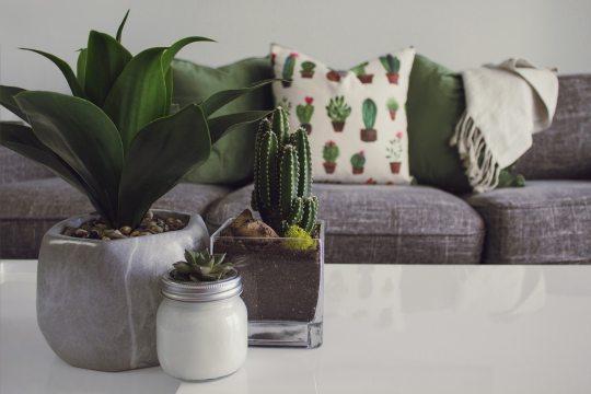 plants for home décor