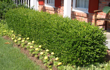 front yard landscaping theinsidecoop