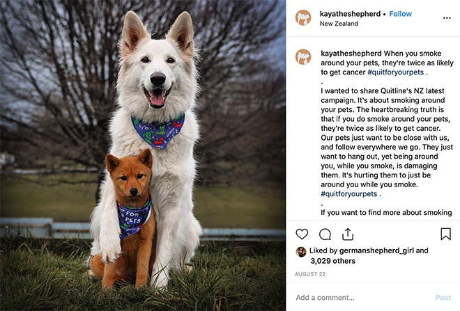 Quitline Quit for your pets Instagram post