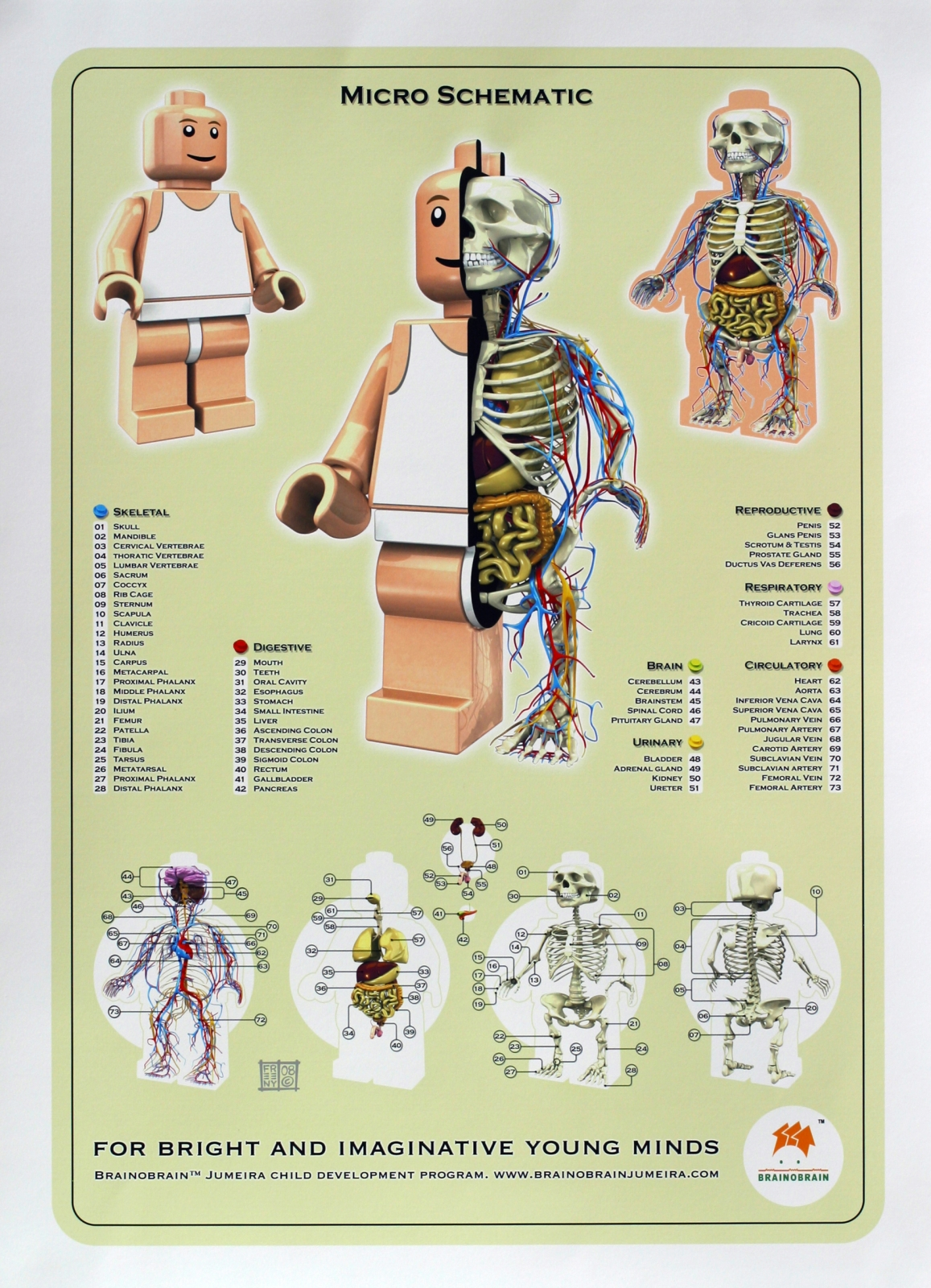 https://i0.wp.com/theinspirationroom.com/daily/print/2009/3/brainobrain_lego_anatomy.jpg