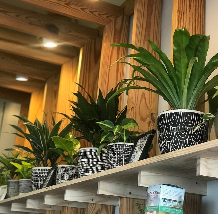 Green Nectar Juicery photo of indoor plants