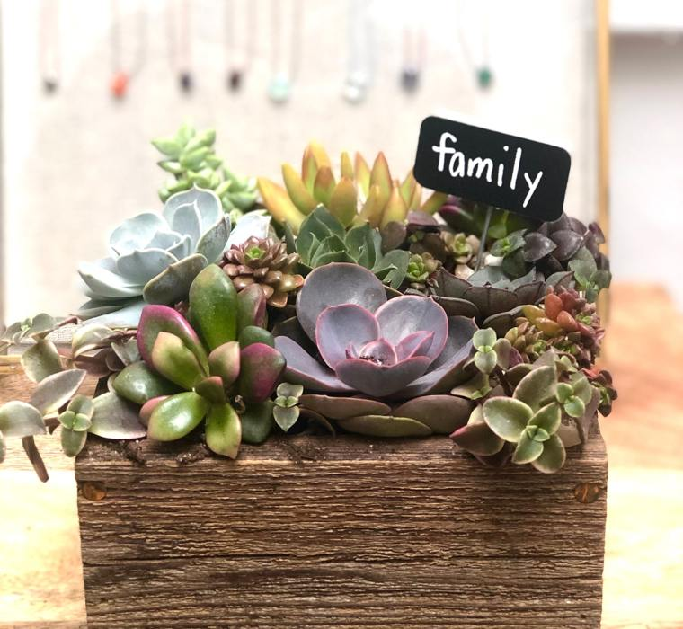 succulents example by Inspired Garden Maplewood New Jersey