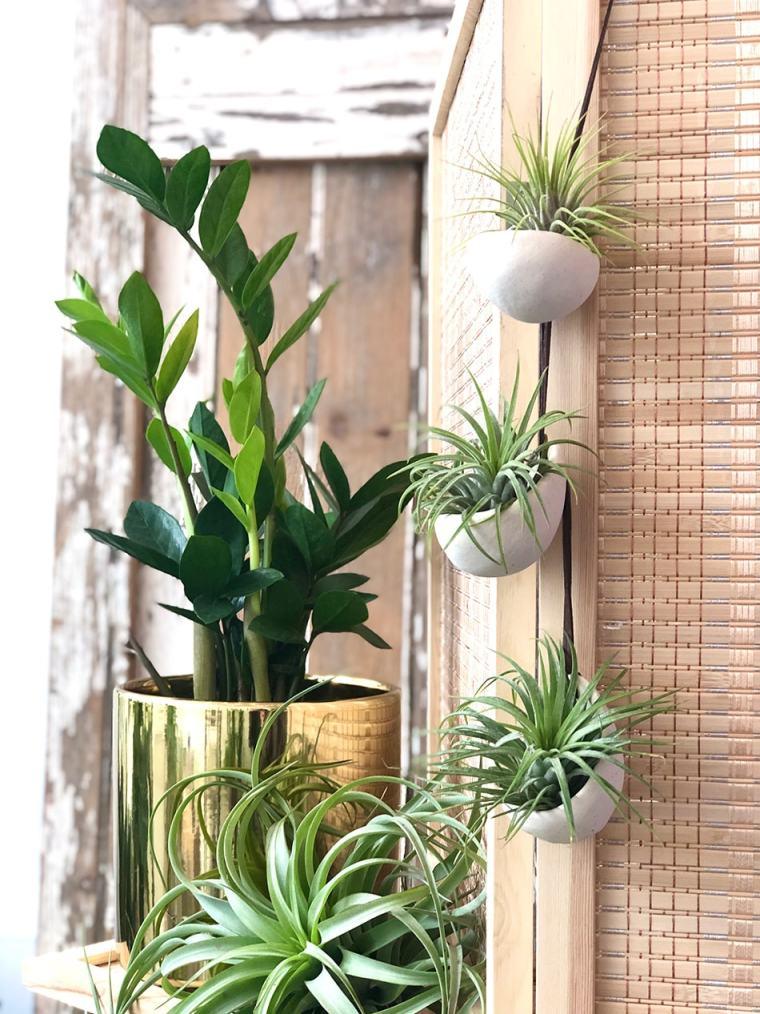 indoor botanical plants for slideshow