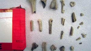exhibit-bones-5
